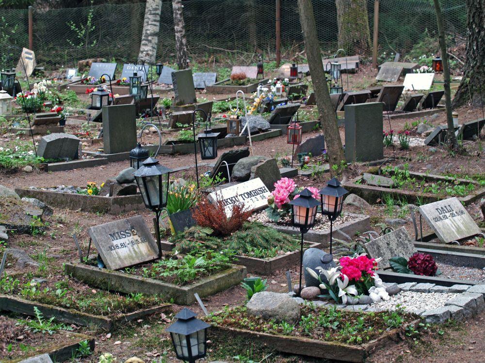 Den Australian Shepherd auf dem Tierfriedhof begraben.