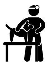 Anzeichen wann ich mit dem Australian Shepherd zum Tierarzt muss