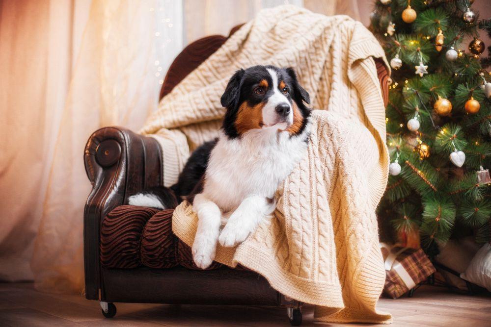 Sie können den Hund nicht den ganzen Tag allein zuhause lassen.