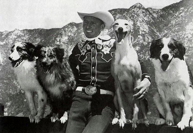 australian shepherd geschichte