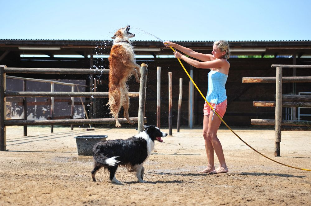 Ursprung Australian Shepherd