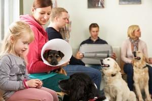 Wann muss ich mit dem Australian Shepherd zum Tierarzt?;