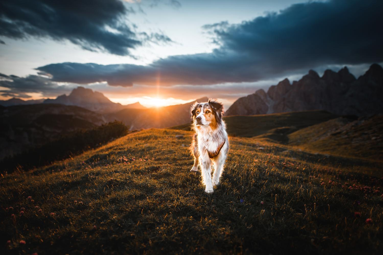 Urlaub Australian Shepherd